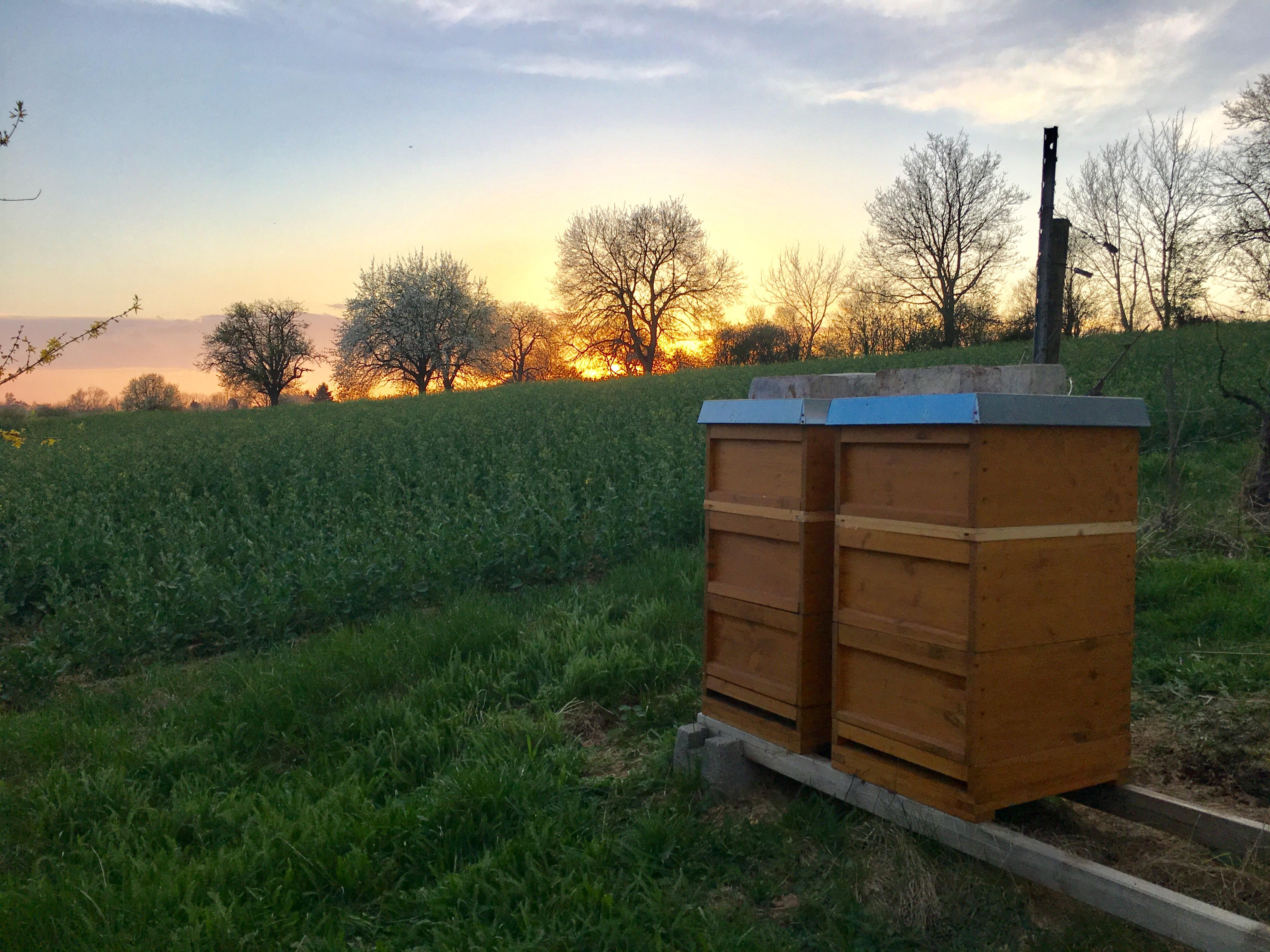Honigräume aufgesetzt